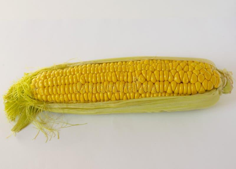 Milho dourado doce Imagem de uma grão amarela da espiga de milho doce Fileiras densas de sementes do milho imagens de stock royalty free