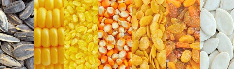 Milho, feijões de soja, passas, sementes de girassol, sementes de abóbora foto de stock