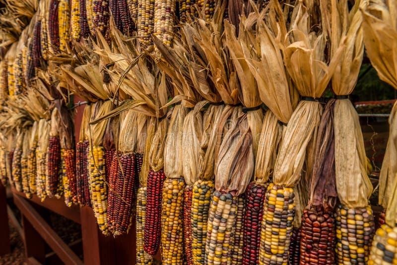 Milho indiano no outono para a decoração da queda imagens de stock