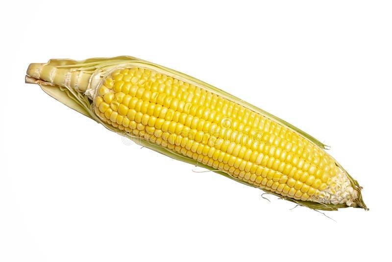 Milho isolado em um fundo branco Espiga de milho fresca isolada no fundo branco foto de stock