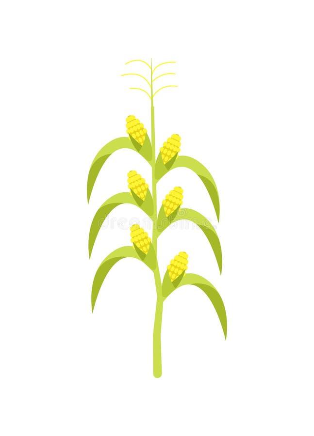 Milho no ícone do vetor da haste ilustração stock