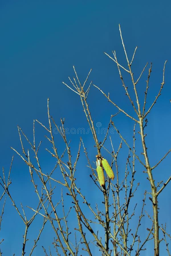 Milho que pendura em uma árvore fotografia de stock royalty free