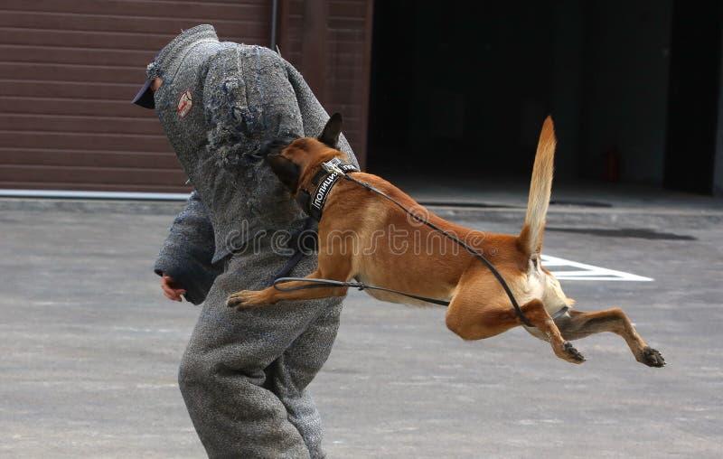 Milicyjni psy w Rosja royalty ilustracja