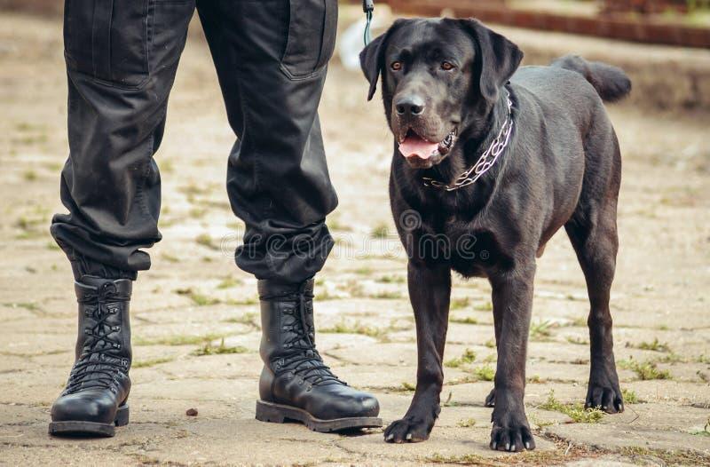 Milicyjny pies w Polska zdjęcia royalty free
