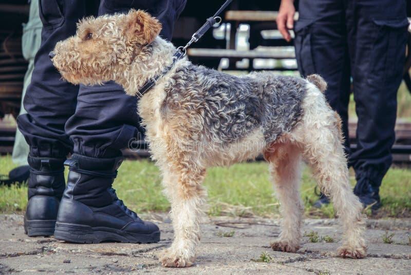 Milicyjny pies w Polska zdjęcie stock