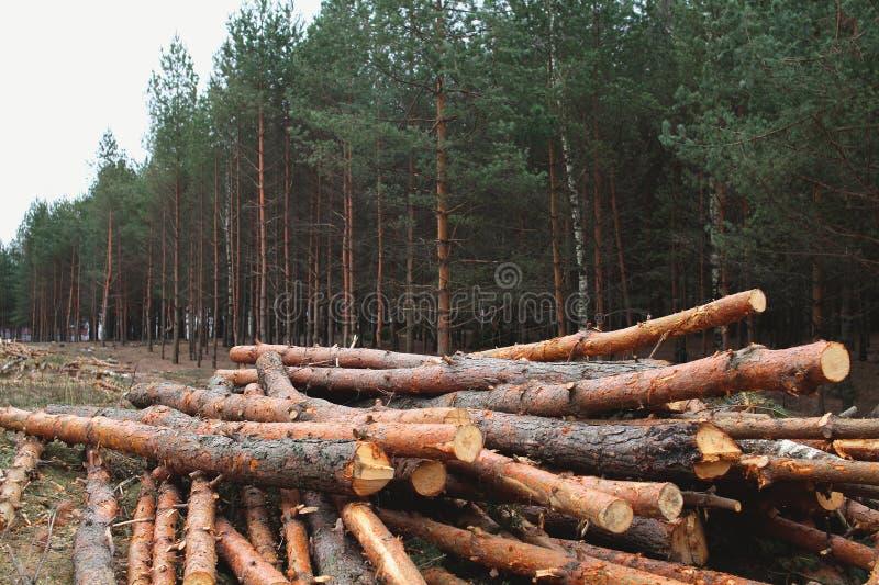 Milieu, aard en ontbossingsbos die - bomen in hout felling stock afbeelding