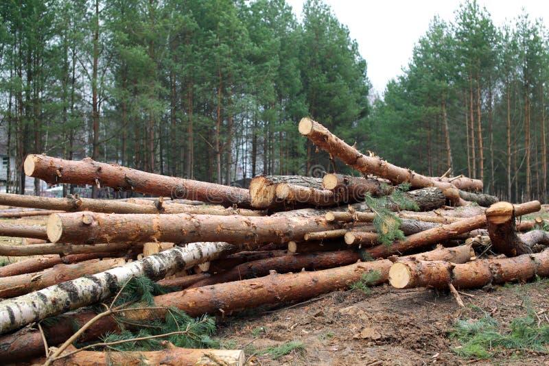 Milieu, aard en ontbossingsbos - het felling van bomen royalty-vrije stock fotografie