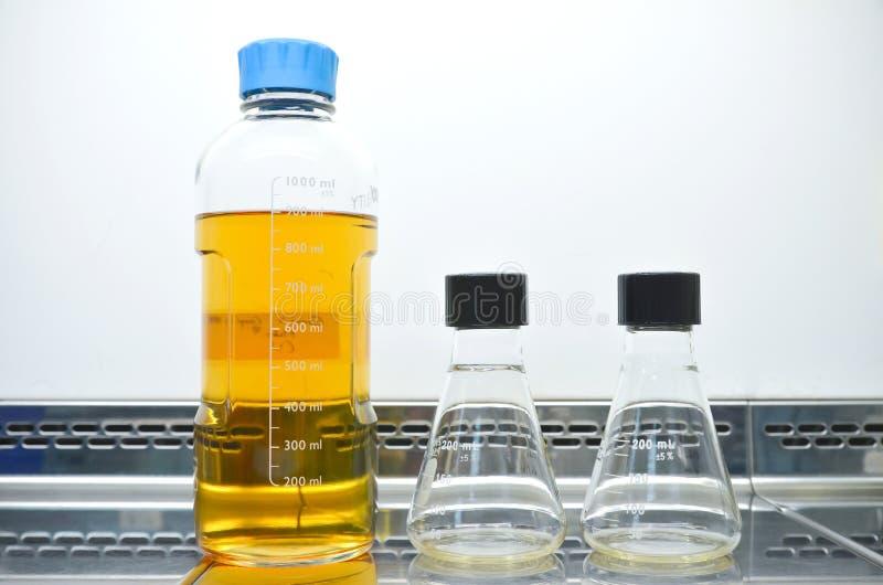 Milieu de culture cellulaire image stock