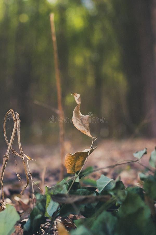 Milieu de natuurlijke wereld, als geheel of op een bepaald geografisch gebied royalty-vrije stock fotografie