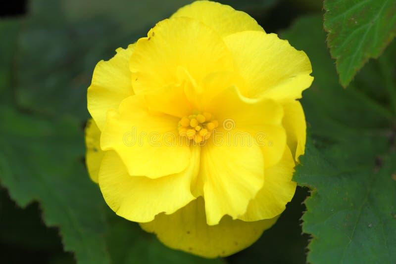 Milieu jaune de fleur photographie stock libre de droits