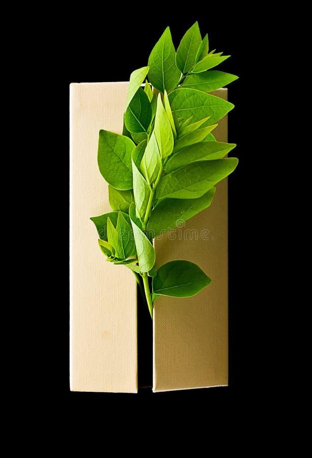 Milieuconcept: De bladeren komen uit uit dozen van B worden geïsoleerd die stock afbeelding