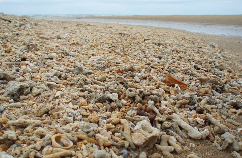 Milieuvervuiling: Strand met dode koralen van het Grote Barrièrerif wordt opgestapeld dat stock foto's