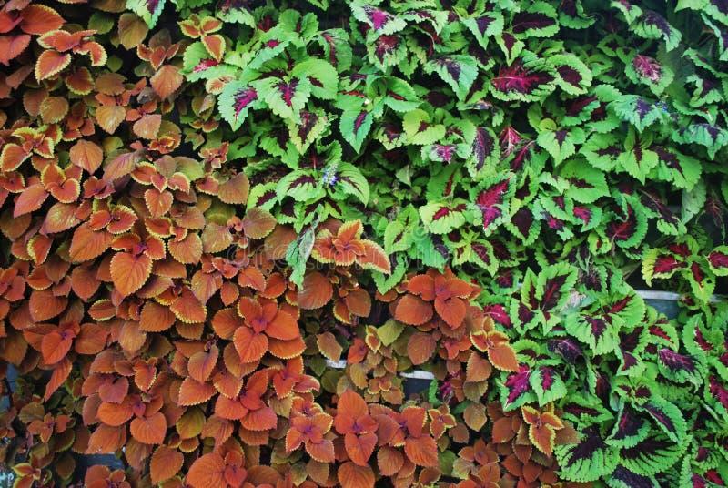 Milieuvriendelijke verticale tuin wal royalty-vrije stock afbeeldingen