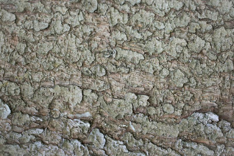 Milieux abstraits : texture d'une écorce d'arbre impeccable midaged ~35 ans image libre de droits