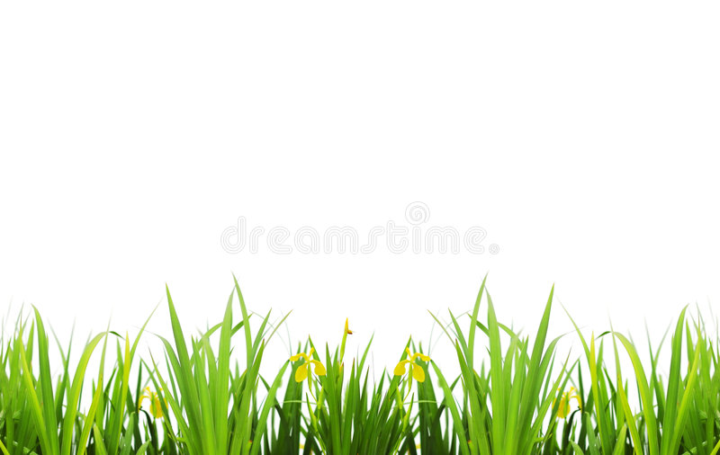 Milieux d'herbe image stock