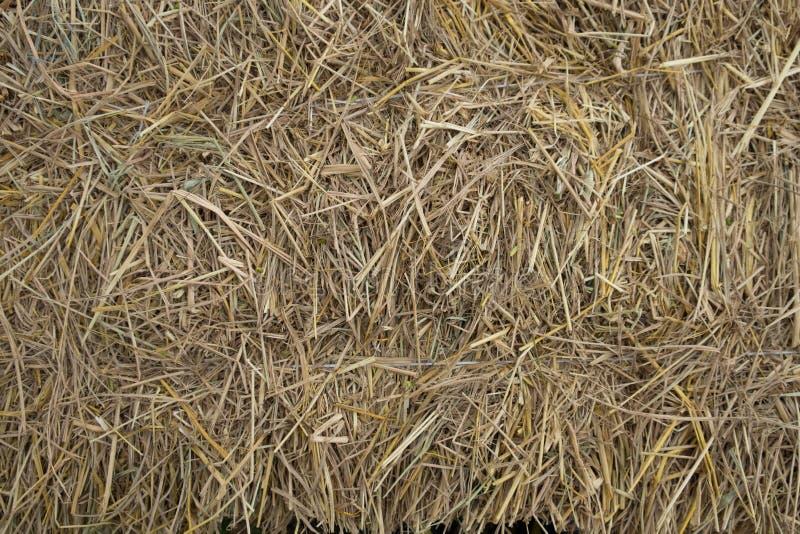 Milieux d'herbe de paille images stock