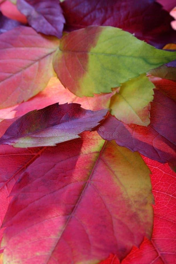 Milieux de lames d'automne image libre de droits