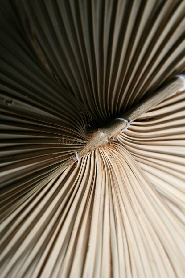 Milieux en bambou photo stock