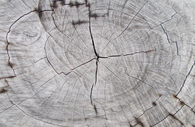 Milieux en bois de tronc de coupe d'arbre de plan rapproché, texture d'arbre d'anneau de tronçon naturel de coupe et modèles en b photo stock