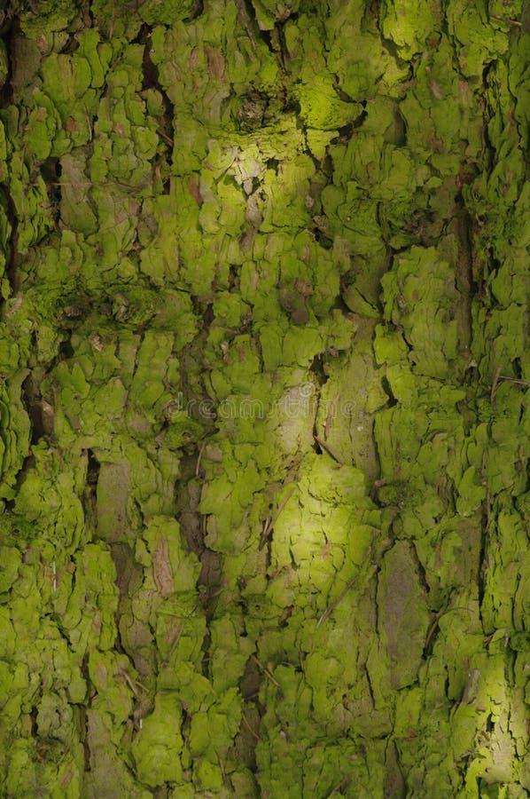 Milieux en bois verts photographie stock