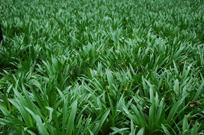 Milieux - herbe images stock