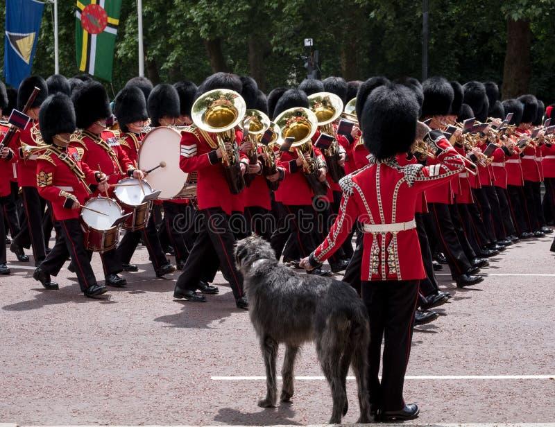 Militärkapelle marschiert hinunter das Mall während sich sammeln die Farbmilitärzeremonie Soldat mit great dane-Hundegrüßen lizenzfreie stockfotografie