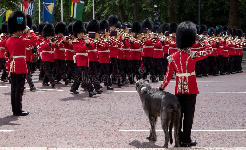 Militärkapelle marschiert hinunter das Mall während sich sammeln die Farbmilitärzeremonie Soldat mit great dane-Hundegrüßen stockfotos