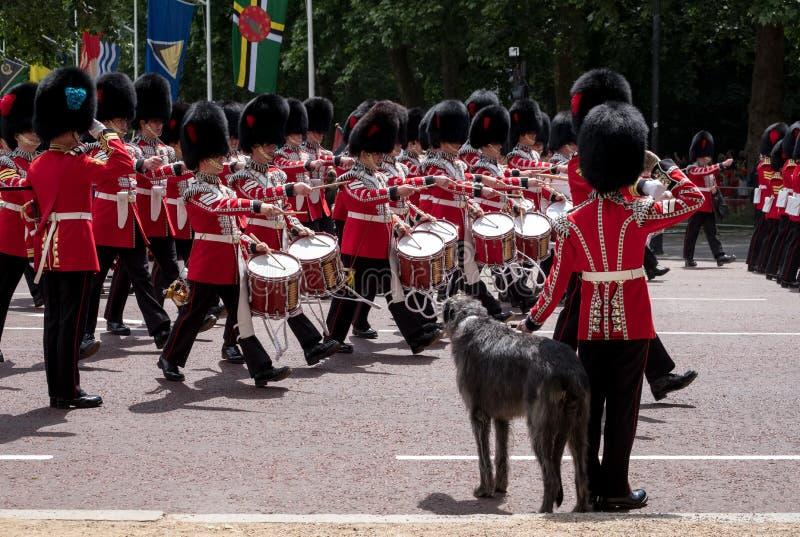 Militärkapelle marschiert hinunter das Mall während sich sammeln die Farbmilitärzeremonie Soldat mit great dane-Hundegrüßen stockfotografie