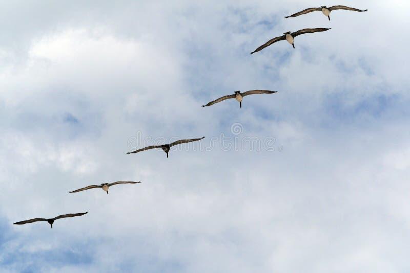 Militair-als Vorming die van Zes Vogels boven overgaan royalty-vrije stock foto's