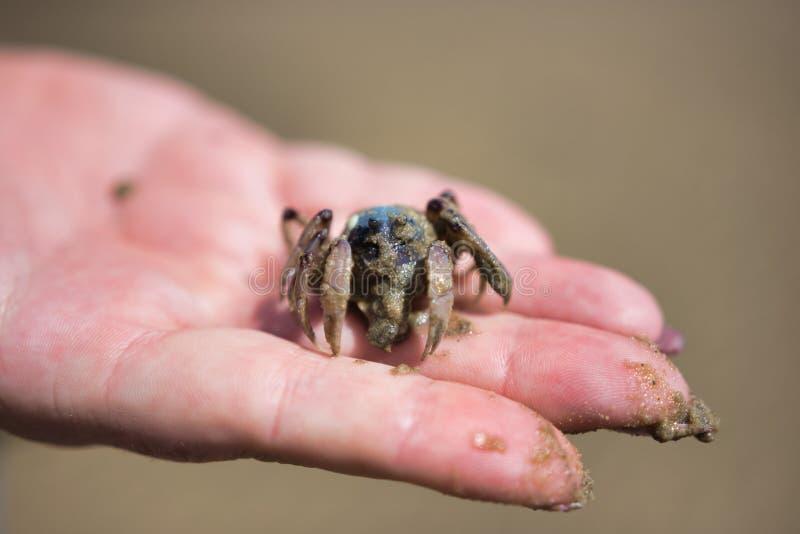Militair in Hand Crab Held royalty-vrije stock afbeelding