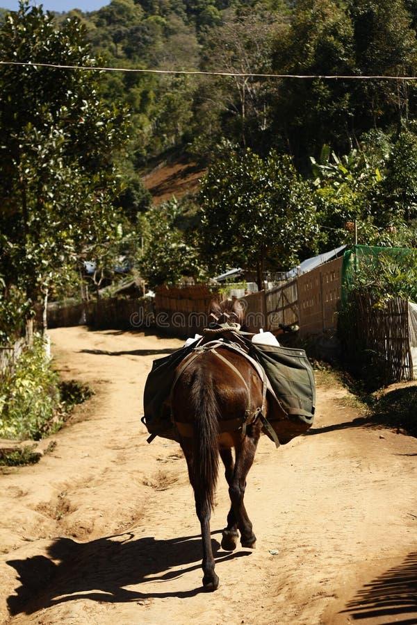 Militair pakpaard die door dorp noordelijk Thailand lopen royalty-vrije stock foto's