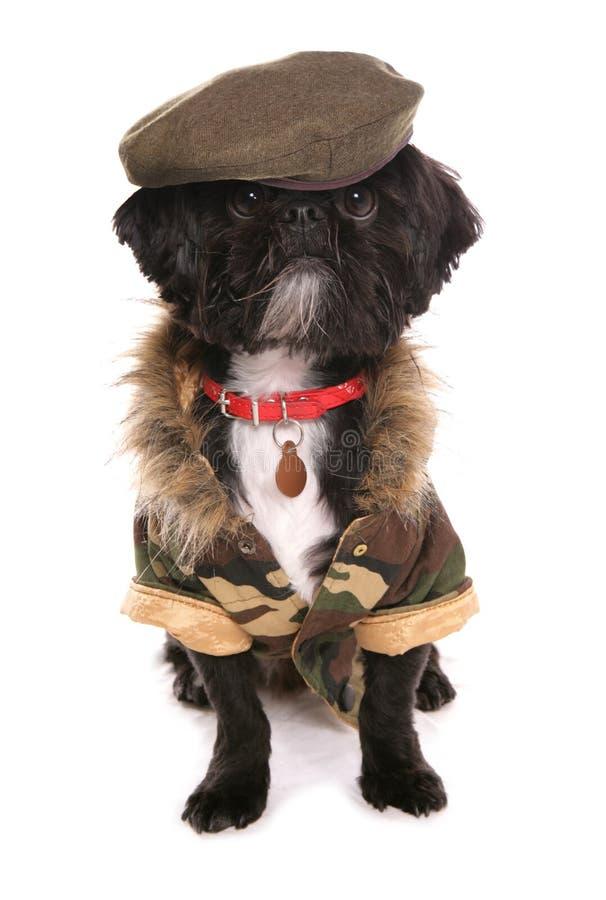 Militaire hond stock fotografie