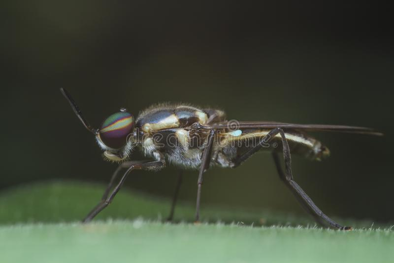 Militairvlieg op groen blad stock afbeeldingen