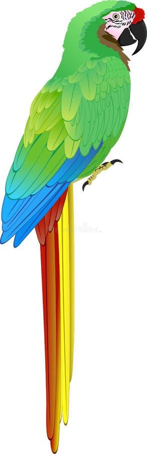 Militaris militares verdes del Ara del Macaw del vector ilustración del vector
