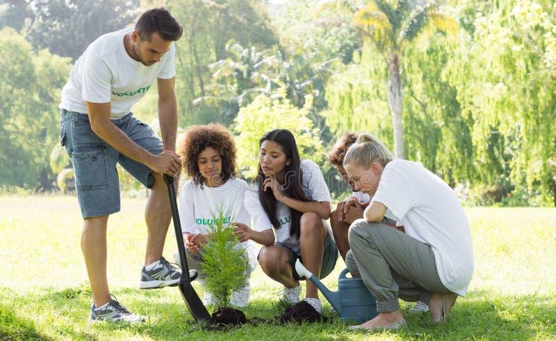 Miljöaktivister som in planterar, parkerar royaltyfria bilder