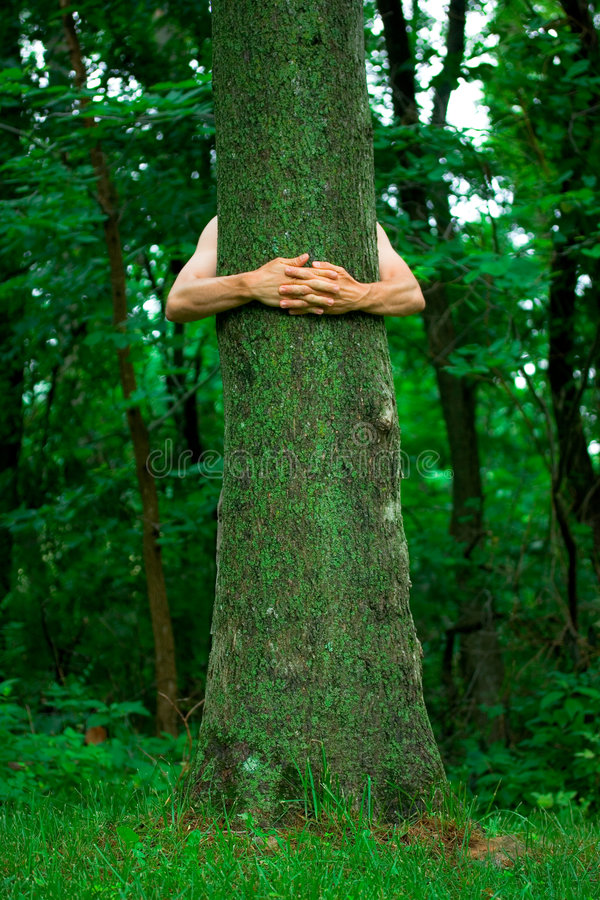 miljöaktivisthuggertree royaltyfri bild