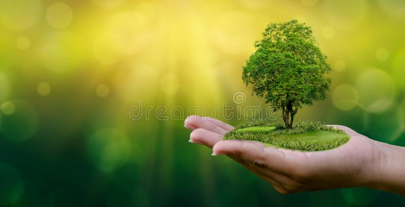 Miljöjorddag i händerna av träd som växer plantor Bokeh gör grön trädet för den kvinnliga handen för bakgrund det hållande på nat royaltyfria bilder