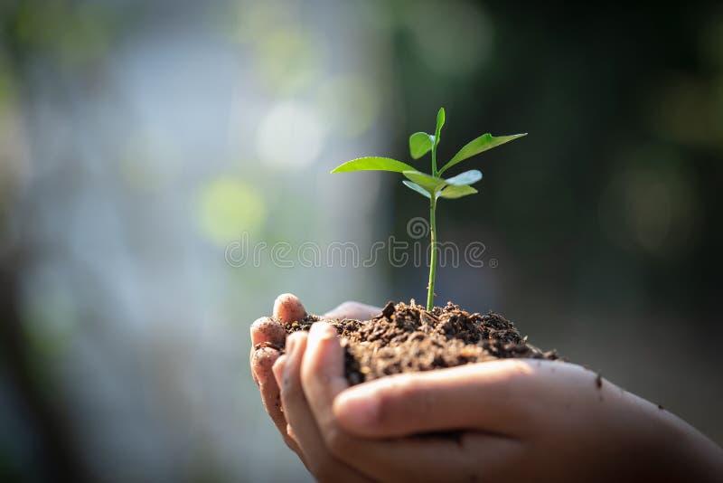 Miljöjorddag i händerna av träd som växer plantor Träd för innehav för hand för Bokeh gräsplanbakgrund kvinnligt på naturfält royaltyfria foton