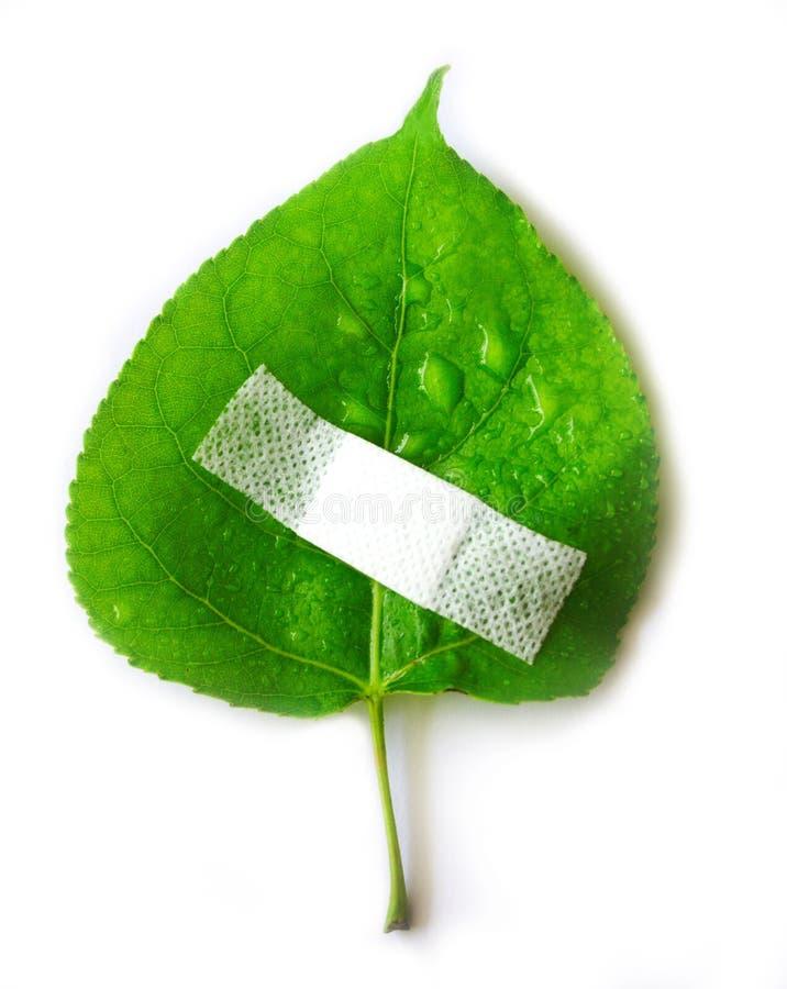 miljön läker skyddsvärlden arkivbild
