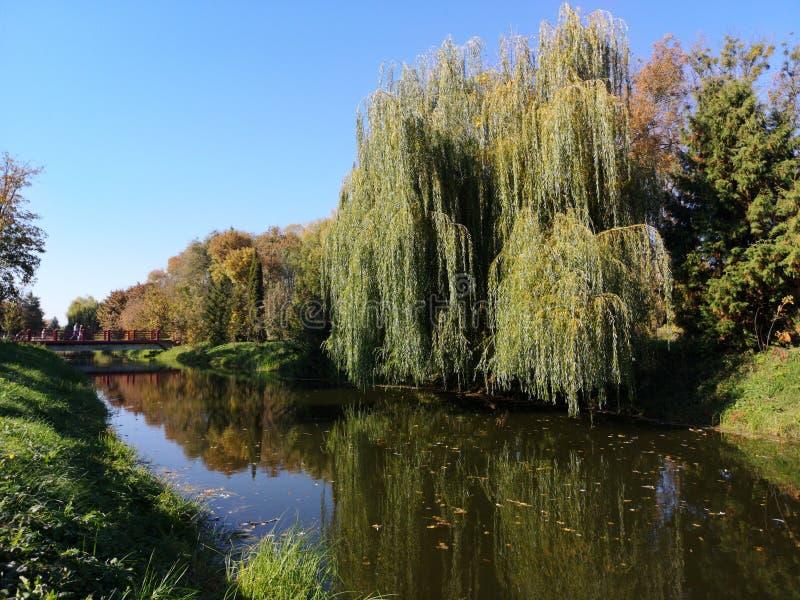 Miljövänliga skogar som avspeglar sig i vattnets skönhet arkivbild