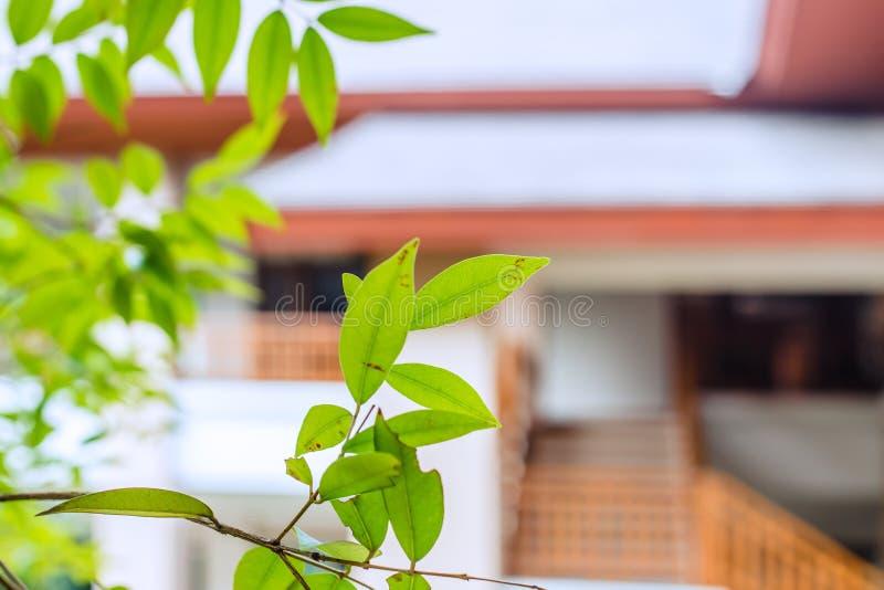 Miljövänligt hemlevande trädplanta för kylning av rumskoncept royaltyfria bilder