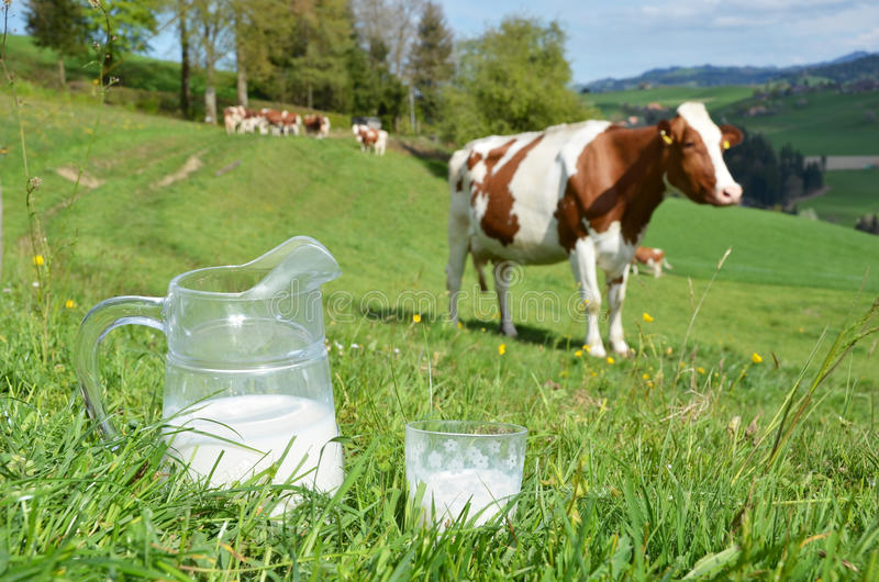 Milk and cows stock photos