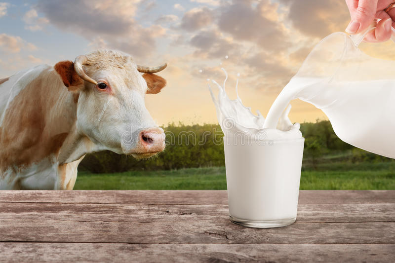 Milk from jug pouring into glass with splashes stock image