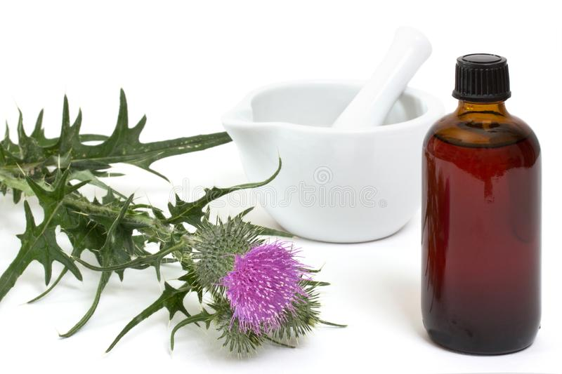 Milk thistle medicine stock image