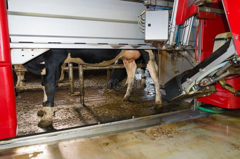 Milking robot stock photo