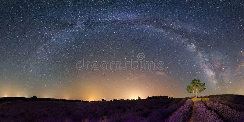 Milky лаванда стоковое изображение rf