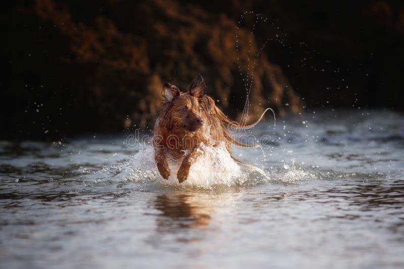 Milky моя собака стоковое фото