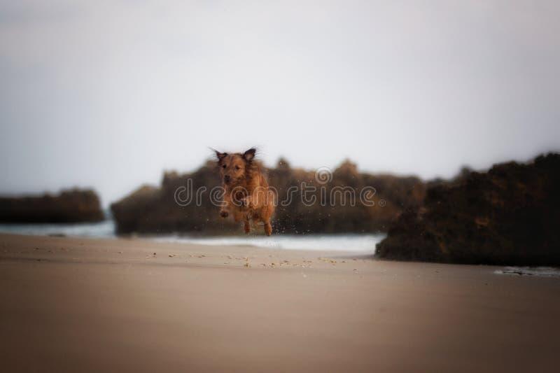 Milky моя собака стоковое изображение rf