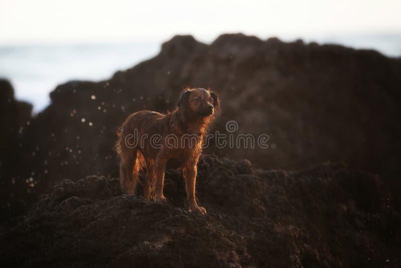 Milky моя собака стоковая фотография rf