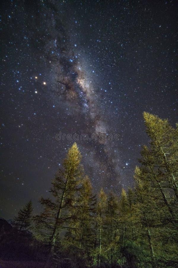 Milky sposób nad las w Aoraki góry Cook parku narodowym obraz royalty free